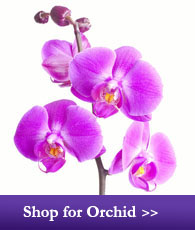 Shop for Orchid