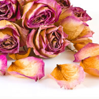 Dried Roses and Rose Petals