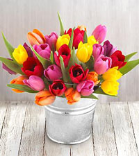 30 Stem Mixed Tulips Pail