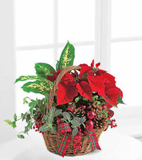 Teleflora's Holiday Planter Basket