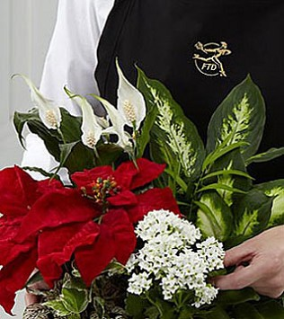 Florist Designed Holiday Planter