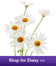 Shop for Daisies