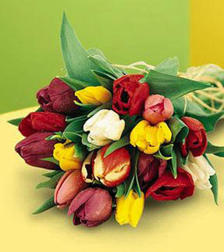 18 Hand-Tied Mixed Tulips