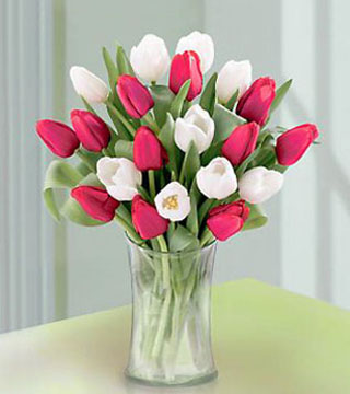 20 Stem Red & White Tulips