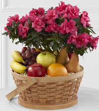 Azalea & Fruit Basket