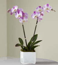 Mini Pink Orchid Planter