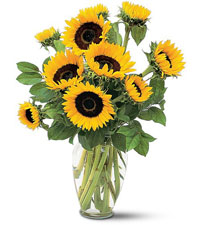 Shining Sunflowers Arrangement